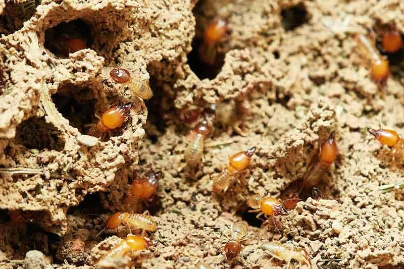 Best Pest Control Service Mornington Peninsula Pest Control Mornington Penisnual